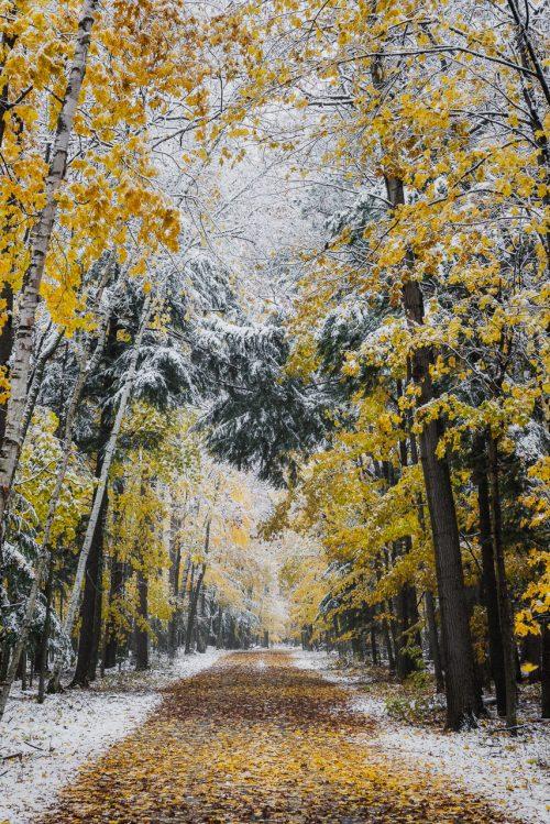 Path Through the Seasons