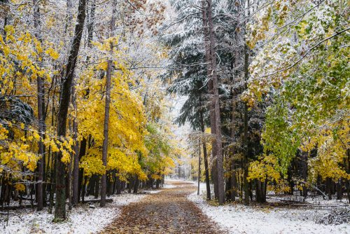 Snowy Fall Colors