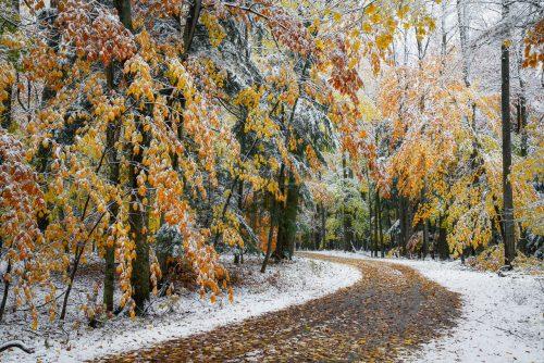 Winter Bend