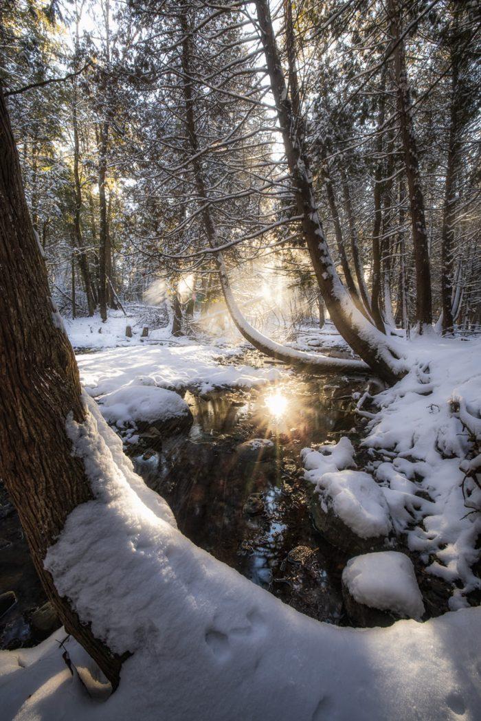 Snowy Light