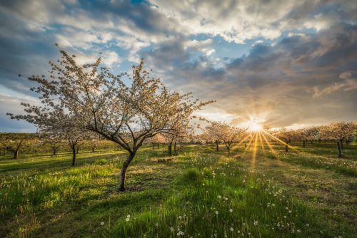 Epic Orchard