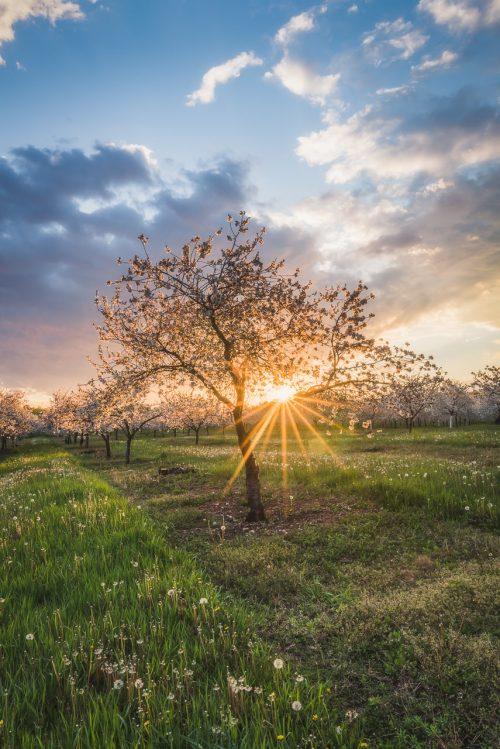 Shining Through The Tree