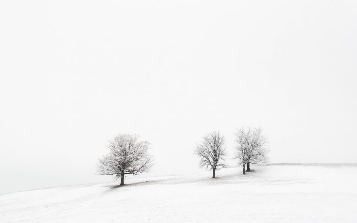 Trees on a HIll