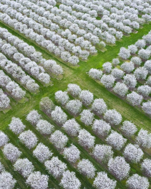 door county cherry blossoms, aerial phtoography, door county photographer, door county, wisconsin