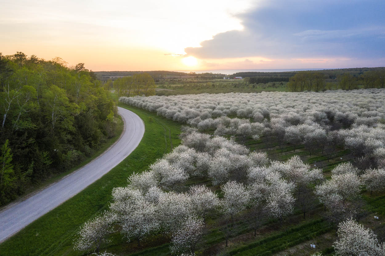 aerial view of cherry blossoms in door county